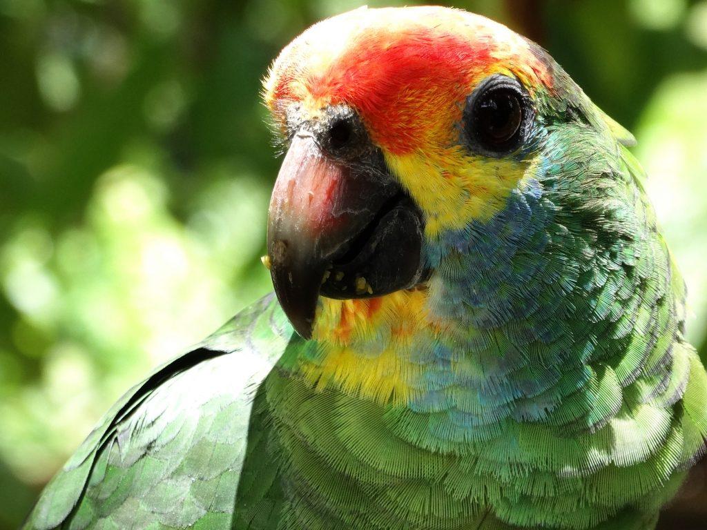 Lista de espécies animais e vegetais ameaçadas de extinção no ES está sendo revisada